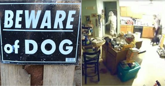 Burglars Ignore Signs Warning About Two Dogs, Then Meet Them Face-To-Face Inside Home