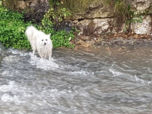 bosnian-taxi-driver-heroically-saves-dog-from-being-drown-in-a-river2