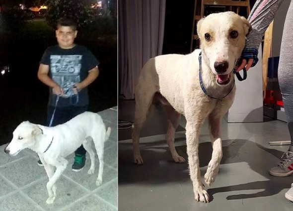 boy-tries-to-sell-skateboard-to-get-a-street-dog-medical-attention5