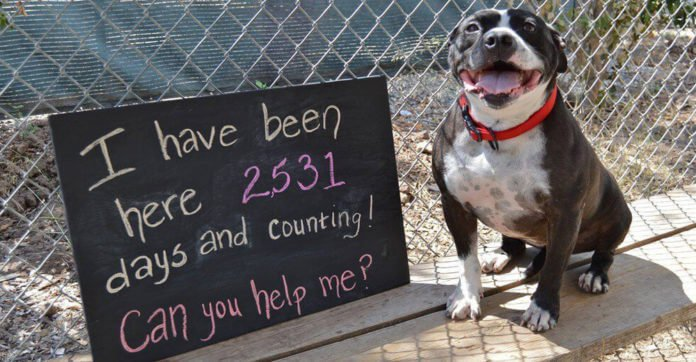 After Being At The Shelter For 2,531 Days, All This Dog Wants Is To Be Loved!