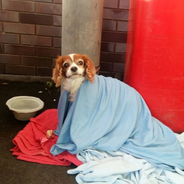 Lonely Little Dog Waits Outside of UK ER for Owner Who Fell Ill