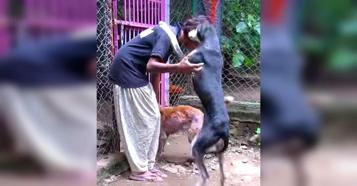 Dog Leaps Onto Rescuer With Joy One Month After Being Found On Street Covered In Sores