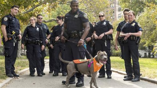 Severely Abuse Pit Bull Gets Loving Visit From The Police Officers Who Saved Her
