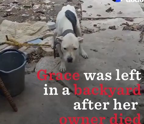 Tied Up Outside For Weeks After Her Owner Died, She Had No Idea Her Life Was About To Change