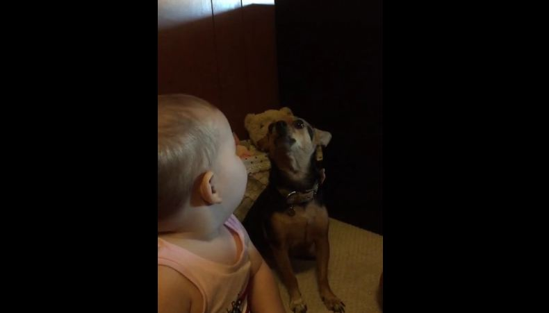 Baby Starts Singing Alone For The Camera, But His Tiny Dog Wants To Harmonize