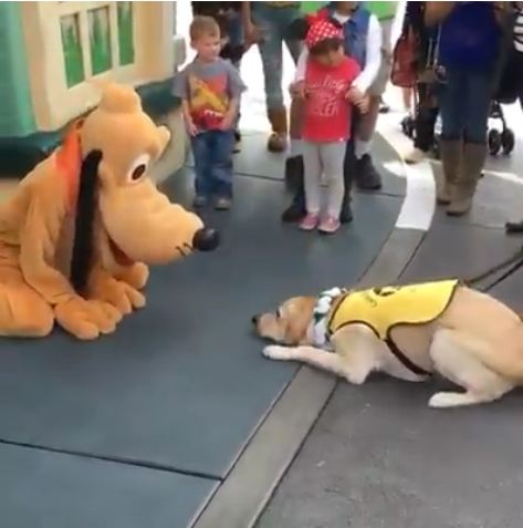 This guide dog's reaction to meeting Pluto is the best thing you'll see all week