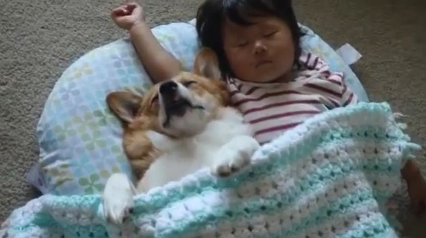 Hey, Join Your Friends On PMG! Mom caught the dog and baby in the middle of the most precious nap