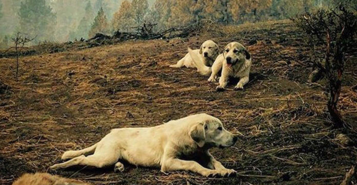 Man Finds Neighbor's Dogs After A Devastating Fire Then Realizes What They're Protecting