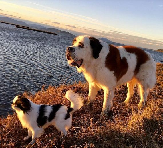 This Doggy Duo Is Basically Everything That's Right With The World