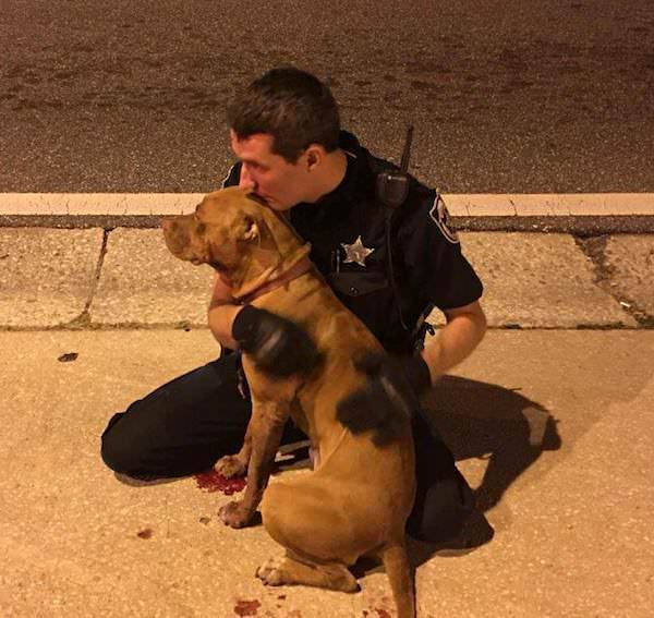 Cops Comfort Injured Pit Bulls Seemingly Abandoned In The Middle Of The Street