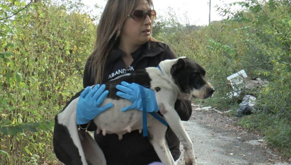 A Woman Rescued A Dog From An Infamous Dumping Ground. Then A Block Away, She Found A Surprise