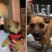 Anna Faris' Rescue Pup Allegedly Found Neglected on the Street!