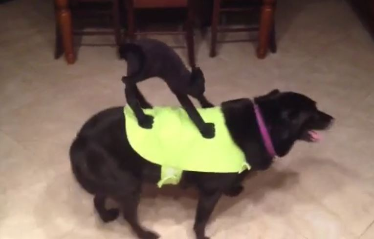 Dog Models Hilarious Halloween Costume