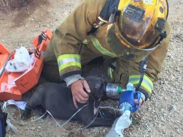 Brave Firefighters in Tucson, Arizona Save Adorable Puppy's Life in Devastating Blaze