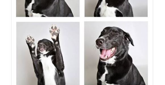 Tippy Aims to Break Internet with his Adoption Photos!