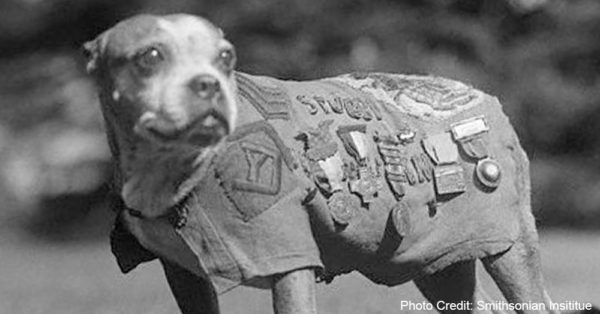 military-dogs2