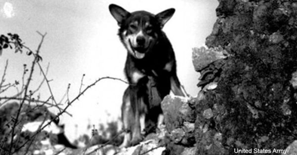 military-dogs3