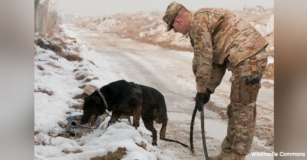 6 Historic Military Dogs Who Gave Everything For Their Country – I Bet You Haven't Heard Of Them All!
