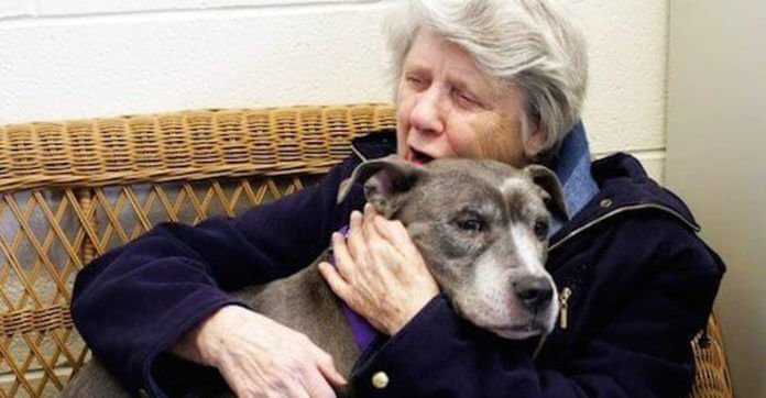 Nuns Adopt Unwanted 9-Year-Old Pit Bull From Shelter