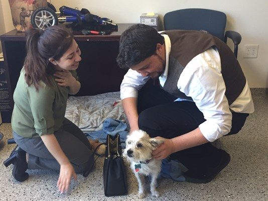 Dog Spa Fugitive Reunites with Tearful, Grateful Owner