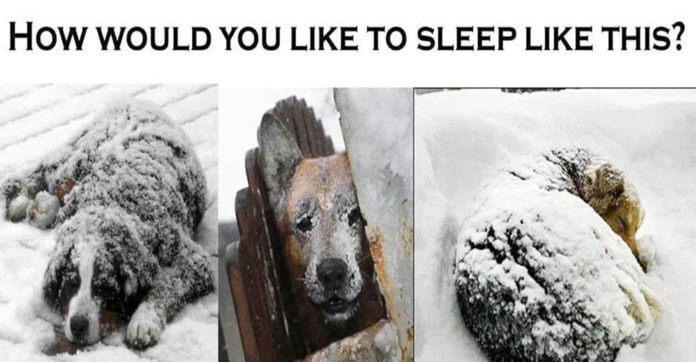 Leave Your Pets Tied Up And Unattended Outside During Extreme Weather, Pay A $500 Fine!