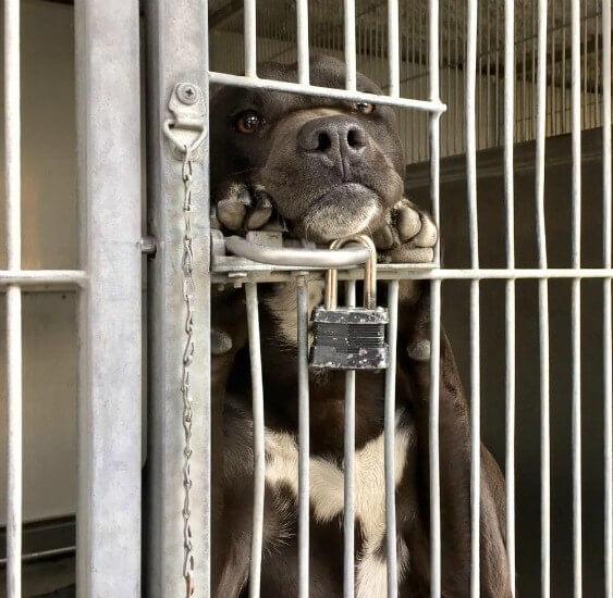 puppy-stands-watches0