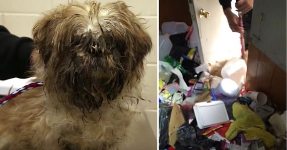 Dog Trapped In House Filled To The Brim With Trash Finally Rescued After Good Samaritan Steps In