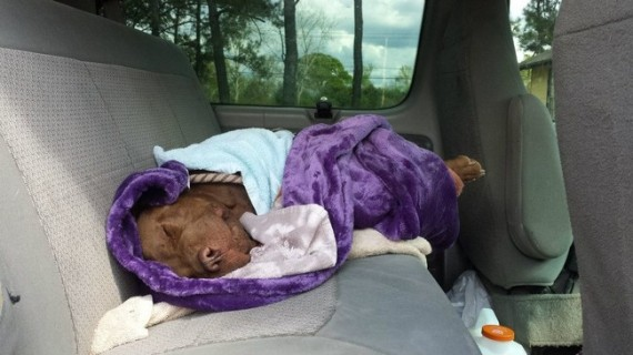 Dog was left for dead in the worst way but discovered by some true heroes