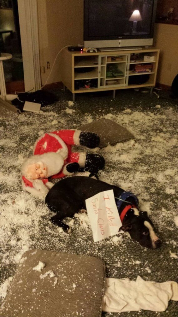 01-dogs-ruined-christmas