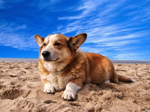 01-top-doggo-names