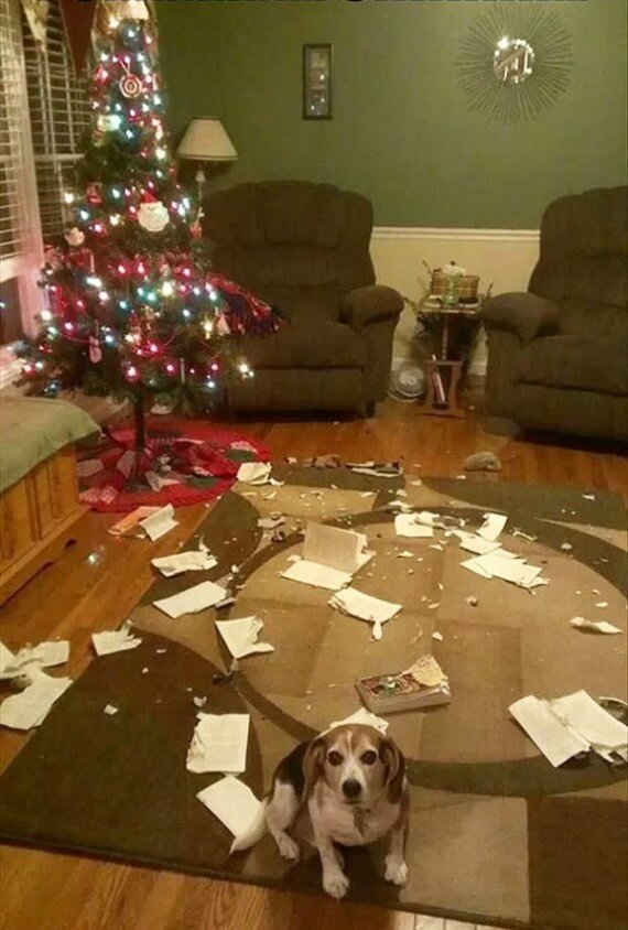 02-dogs-ruined-christmas