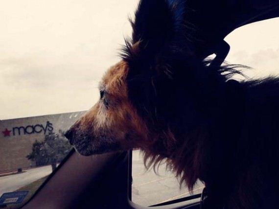 02-shelter-dog