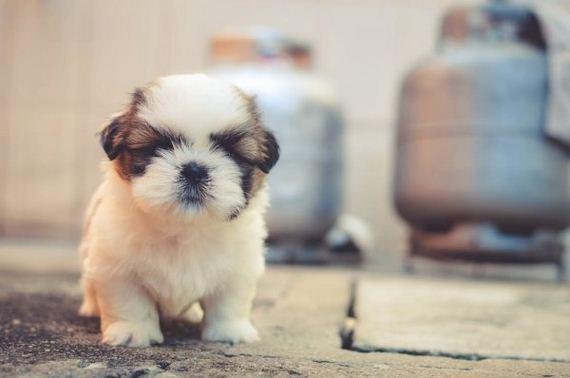 02-top-doggo-names