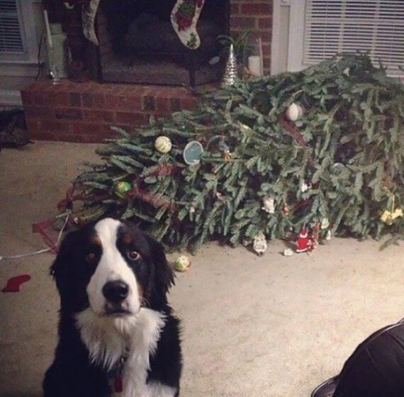 04-dogs-ruined-christmas
