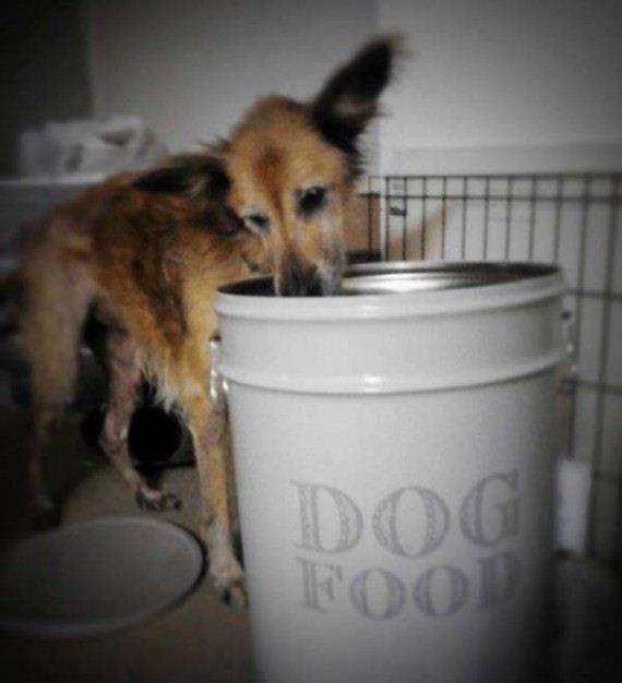 06-shelter-dog