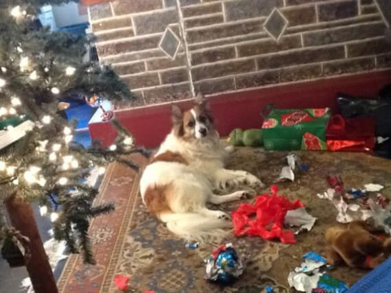 07-dogs-ruined-christmas