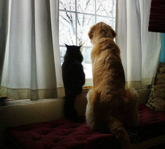 Dog In Mourning For His Cat Best Friend Gets A New Kitten To Cheer Him Up