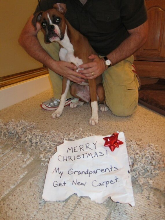 09-dogs-ruined-christmas