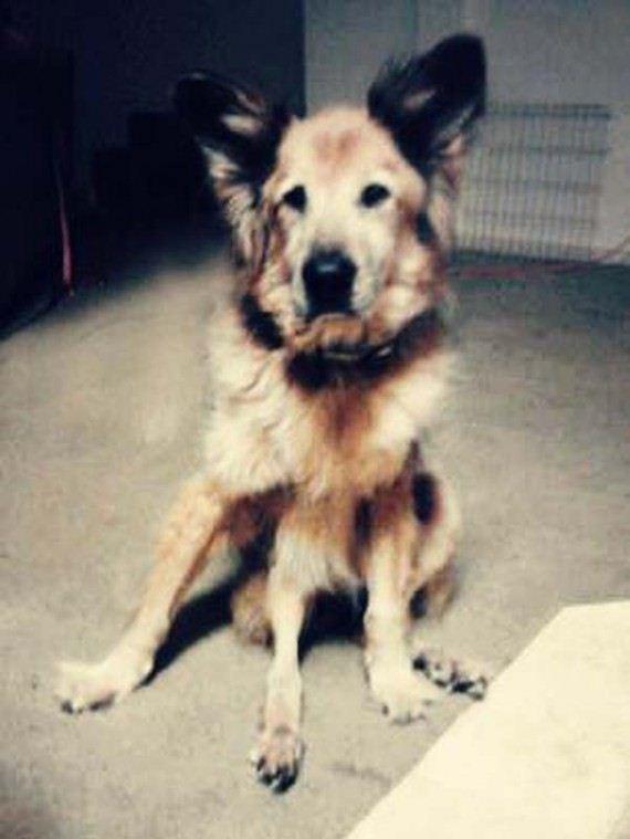 09-shelter-dog