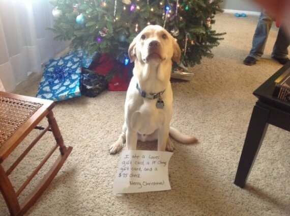 11-dogs-ruined-christmas