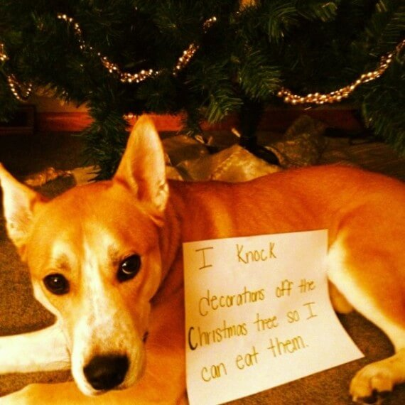 12-dogs-ruined-christmas