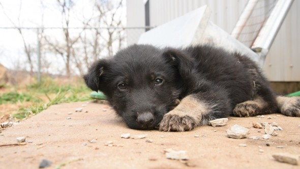 Puppy Rescued from Arkansas Mill So Weak He Has to Crawl to His Rescuers