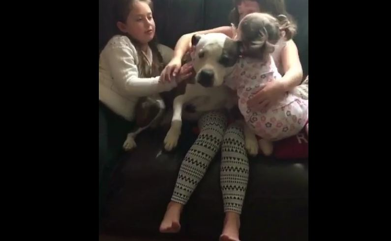 Even after suffering abuse, dog just wants to be loved