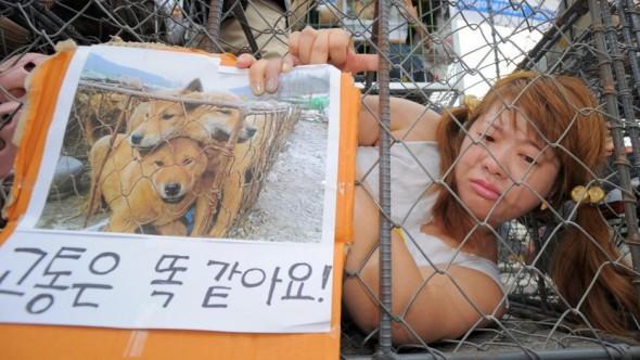 BREAKING NEWS: Massive Dog Meat Market in South Korea Has Been Shut Down