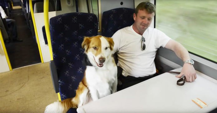 Man Shocked To Bump Into His Dog On Train Ride To Work