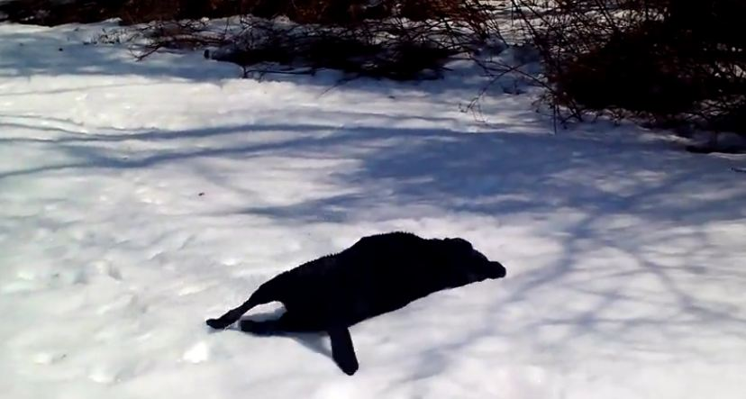 What the dog does in the snow has his family in tears