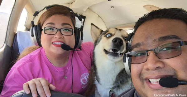 These Volunteer Pilots Airlift Shelter Animals to New Homes Around the Country!