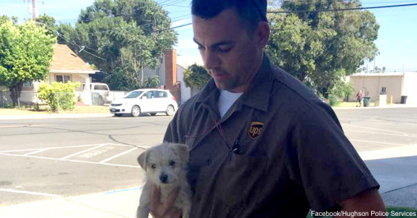 A Quick-Thinking UPS Driver Saved This Puppy's Life!