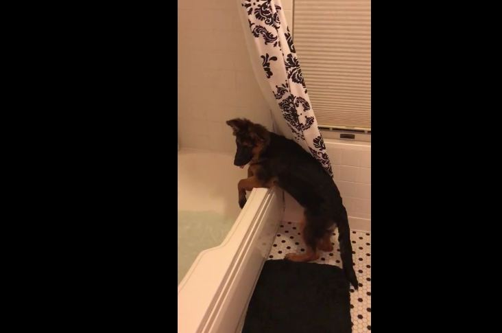 Puppy decides owner's bath time is now her bath time