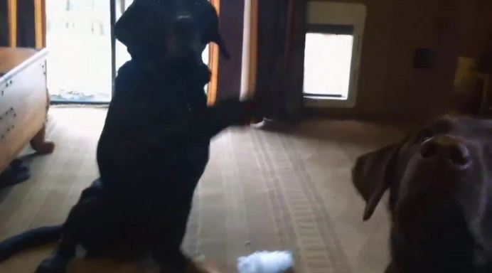 Hey, Join Your Friends On PMG! Dad asks who made the mess — now watch Charlie rat out his sister